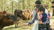 DOWNUNDER FARMSTAYS 3
