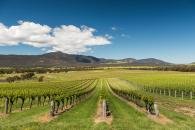 GRAMPIANS WINERIES IMAGE GALLERY2